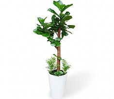 웰빙식물 (떡갈나무)